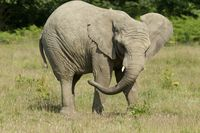 KnowsleySafariElephant