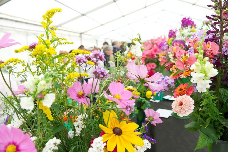 Knowsley Flower Show 2013 iii