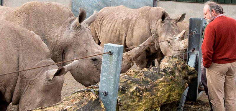 Raoul rhino
