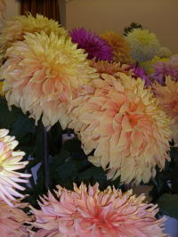 Flowers_01_2