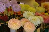 Flowers_05_3